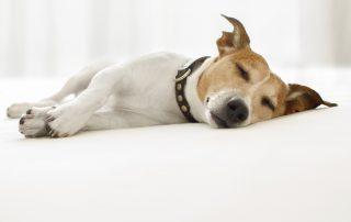 auquabest wasserbetten effizient schlafen B 320x202 - Effizient schlafen: In gleicher Zeit 30 Prozent mehr schlafen