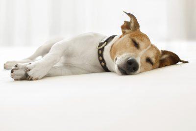 auquabest wasserbetten effizient schlafen B - Effizient schlafen: In gleicher Zeit 30 Prozent mehr schlafen